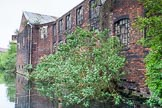BCN 24h Marathon Challenge 2015: Trees growing out of the walls of an old factory on the BCN Engine Arm. Birmingham Canal Navigations,    on 23 May 2015 at 10:43, image #70
