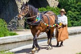 : Sue Day (Horseboating Society) leading boat horse Bilbo over Marple Aqueduct towards butty Maria, to start the journey up the Marple locks.     on 03 July 2015 at 14:45, image #22