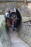 : Sue Day (Horseboating Society) with horse Bilbo walking through the horse tunnel of Marple lock 13..     on 03 July 2015 at 17:42, image #82