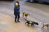 Lord Mayor's Show 2012: Entry 114 - Dogs Trust.. Press stand opposite Mansion House, City of London, London, Greater London, United Kingdom, on 10 November 2012 at 11:58, image #1653