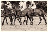 7th Heritage Polo Cup semi-finals: La Mariposa Argentina v La Golondrina Argentina.. Hurtwood Park Polo Club, Ewhurst Green, Surrey, United Kingdom, on 04 August 2012 at 15:44, image #271