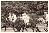 7th Heritage Polo Cup semi-finals: La Mariposa v La Golondrina, Timothy Rose riding forward.. Hurtwood Park Polo Club, Ewhurst Green, Surrey, United Kingdom, on 04 August 2012 at 15:46, image #278
