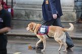 """A """"Hounds for Heroes Cadet"""" marching past the Foreign and Commonwealth Office with his handler before the Remembrance Sunday Cenotaph Ceremony 2018 at Horse Guards Parade, Westminster, London, 11 November 2018, 08:48."""