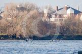 The Boat Race season 2013 - fixture CUBC vs Leander: The Goldie vs Imperial BC fixture.. River Thames Tideway between Putney Bridge and Mortlake, London SW15,  United Kingdom, on 02 March 2013 at 15:26, image #64