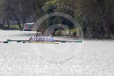 The Women's Boat Race and Henley Boat Races 2014: The Women's Reserves - Osiris v. Blondie race. Blondie (Cambridge) with cox Will McDermott, stroke Hannah Evans, 7 Nicole Stephens, 6 Sarah Crowther, 5 Hannah Roberts, 4 Gabriella Johannson, 3 Anouska Bartlett, 2 Sara Lackner, bow Tamsin Samuels.. River Thames, Henley-on-Thames, Buckinghamshire, United Kingdom, on 30 March 2014 at 14:16, image #143