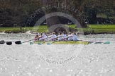 The Women's Boat Race and Henley Boat Races 2014: The Women's Reserves - Osiris v. Blondie race. Blondie (Cambridge) with cox Will McDermott, stroke Hannah Evans, 7 Nicole Stephens, 6 Sarah Crowther, 5 Hannah Roberts, 4 Gabriella Johannson, 3 Anouska Bartlett, 2 Sara Lackner, bow Tamsin Samuels.. River Thames, Henley-on-Thames, Buckinghamshire, United Kingdom, on 30 March 2014 at 14:16, image #147