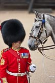 Trooping the Colour 2009: WO1 (GSM) W D G 'Billy' Mott OBE, Welsh Guards, behind him Wellesley, the horse ridden by the Field Officer.. Horse Guards Parade, Westminster, London SW1,  United Kingdom, on 13 June 2009 at 10:37, image #70