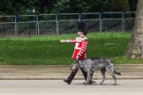 The Colonel's Review 2012: Conmael, an Irish Wolfhound, and mascot of the Irish Guards, with his handler marching along St. James's Park, on the Northern side of Horse Guards Parade.. Horse Guards Parade, Westminster, London SW1,  United Kingdom, on 09 June 2012 at 10:22, image #43