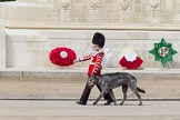 The Colonel's Review 2012: Conmael, an Irish Wolfhound, and mascot of the Irish Guards, with his handler marching past the Guards Memorial.. Horse Guards Parade, Westminster, London SW1,  United Kingdom, on 09 June 2012 at 10:22, image #44