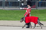 Trooping the Colour 2012: Another close look at Conmael, the Irish Wolfhound mascot dog of the Band of the Irish Guards, with his handler.. Horse Guards Parade, Westminster, London SW1,  United Kingdom, on 16 June 2012 at 10:25, image #47