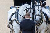 Major General's Review 2013: The two Windsor Grey horses pulling the  carriage that will carry HM The Queen.. Horse Guards Parade, Westminster, London SW1,  United Kingdom, on 01 June 2013 at 11:00, image #265