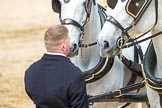 Major General's Review 2013: The two Windsor Grey horses pulling the  carriage that will carry HM The Queen.. Horse Guards Parade, Westminster, London SW1,  United Kingdom, on 01 June 2013 at 12:06, image #708