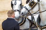 Major General's Review 2013: The two Windsor Grey horses pulling the  carriage that will carry HM The Queen.. Horse Guards Parade, Westminster, London SW1,  United Kingdom, on 01 June 2013 at 12:06, image #709