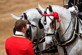 during The Colonel's Review {iptcyear4} (final rehearsal for Trooping the Colour, The Queen's Birthday Parade)  at Horse Guards Parade, Westminster, London, 2 June 2018, 12:13.